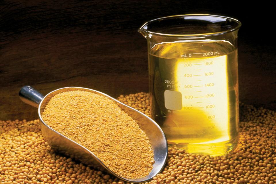 Consumo de óleo de soja é associado com alterações neurológicas
