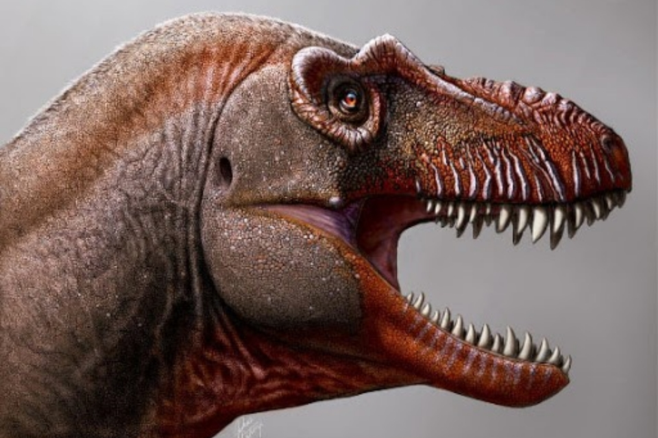 'Ceifador da Morte': nova espécie de tiranossauro é encontrada no Canadá