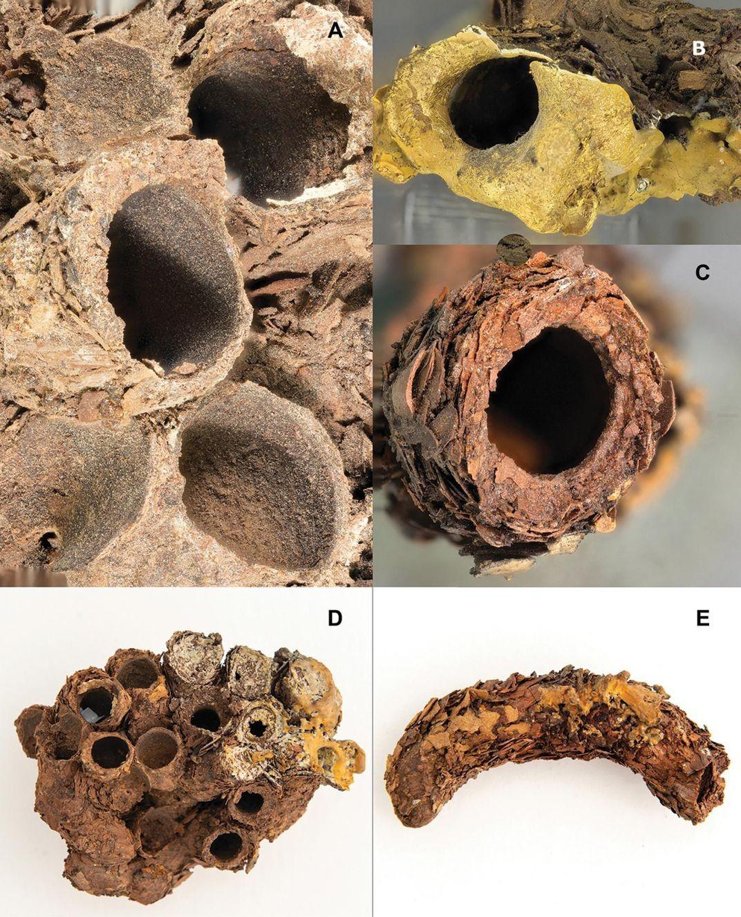 ninhos mumificados
