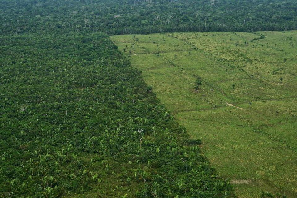 Perto de 20% da Floresta Amazônica libera mais CO2 do que absorve