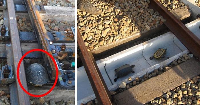 https://www.boredpanda.com/turtle-tunnel-train-track-safety-japan-railways/