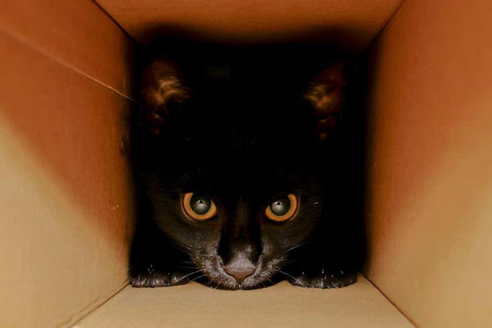 """Físico """"desconstrói"""" Paradoxo do Gato de Schrödinger para explicá-lo"""