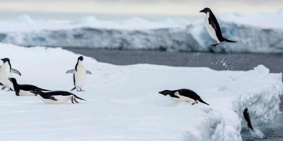 (Fonte: National Geographic/Reprodução)