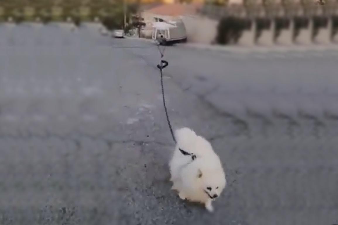 Em quarentena, homem leva cão para passear de drone