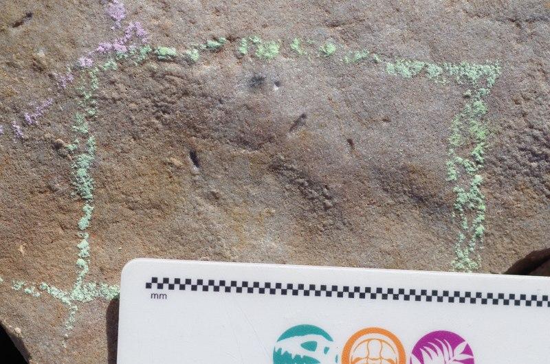As pequenas impressões deixadas na rocha pelo Ikaria wariootia