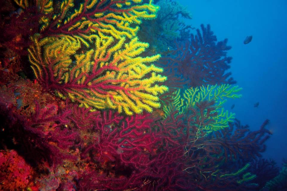 Grande Barreira de Corais está morrendo, e isso não é nada bom