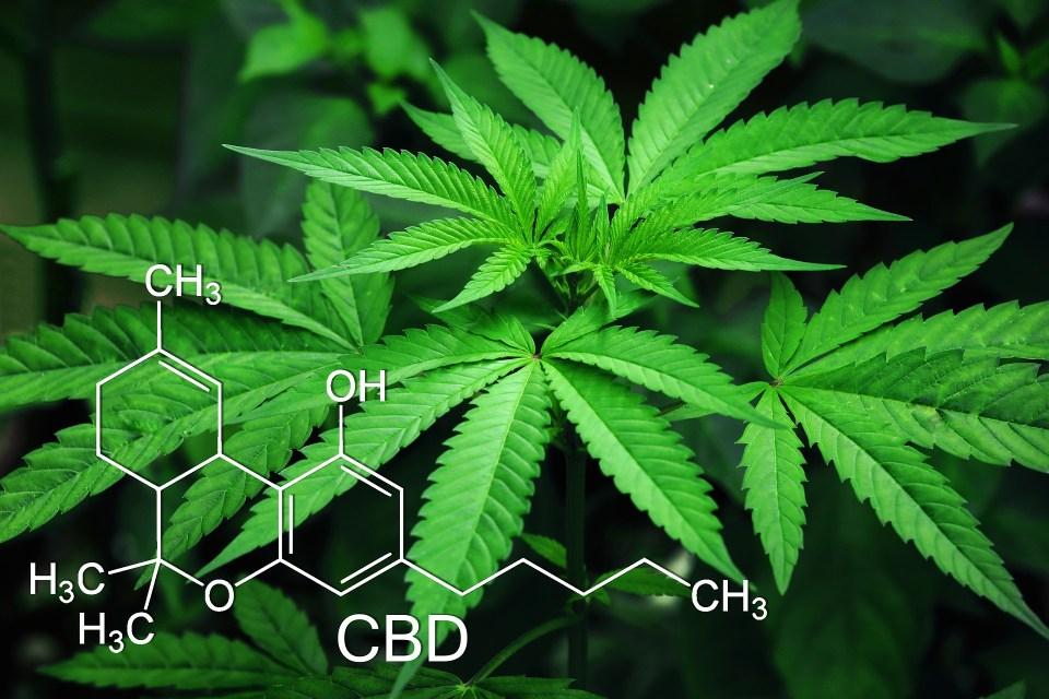 Cannabis pode ser uma arma contra as superbactérias