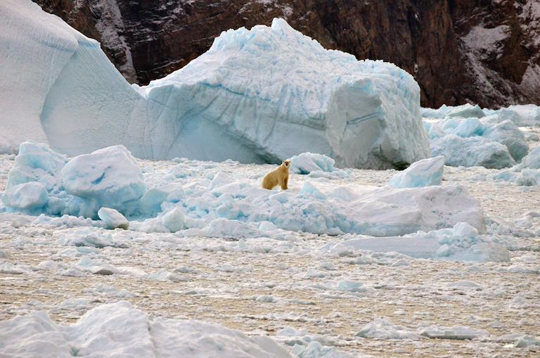 O aquecimento global traz consequências para pessoas e animais