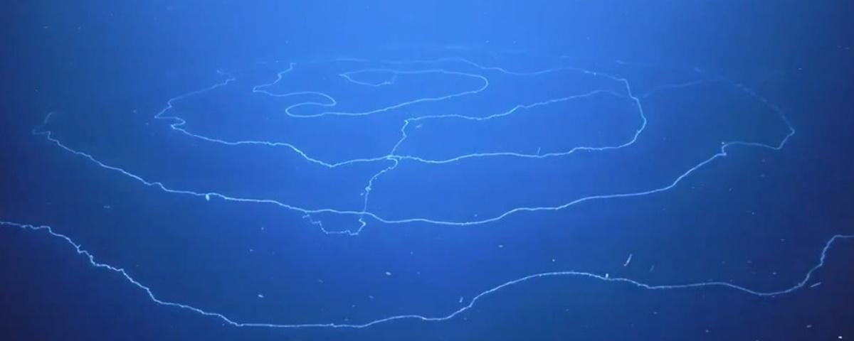 Pesquisadores flagram organismo marinho gigante preparado para o ataque