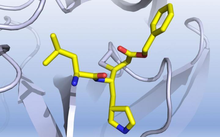 Representação 3D da estrutura da enzina-chave do Sars-CoV-2