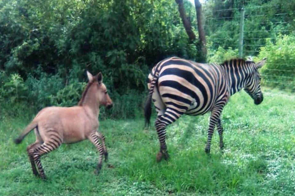 Filhote se diverte com a mãe em parque nacional (Fonte: Sheldrick Wildlife Trust)