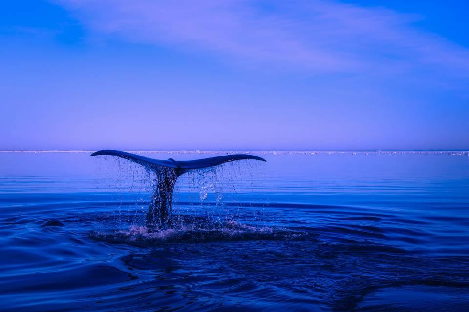 Vida oceânica pode entrar em colapso ainda nesta década, indica estudo