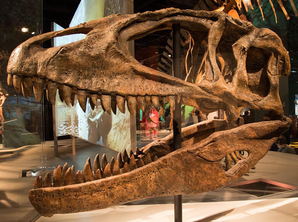 Carcarodontossauro