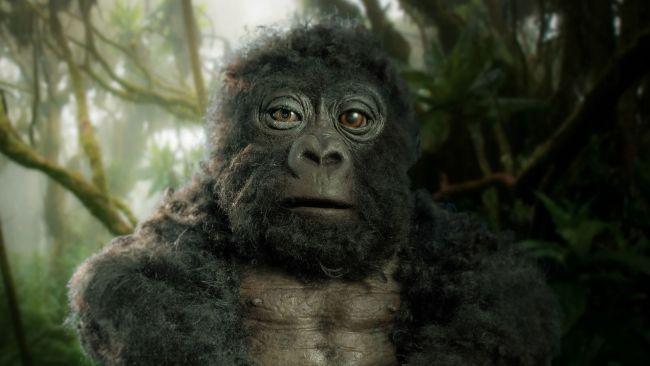 O jovem gorila robô que capturou imagens incríveis do grupo de gorilas-das-montanhas (Fonte: John Dawner Productions / Reprodução)