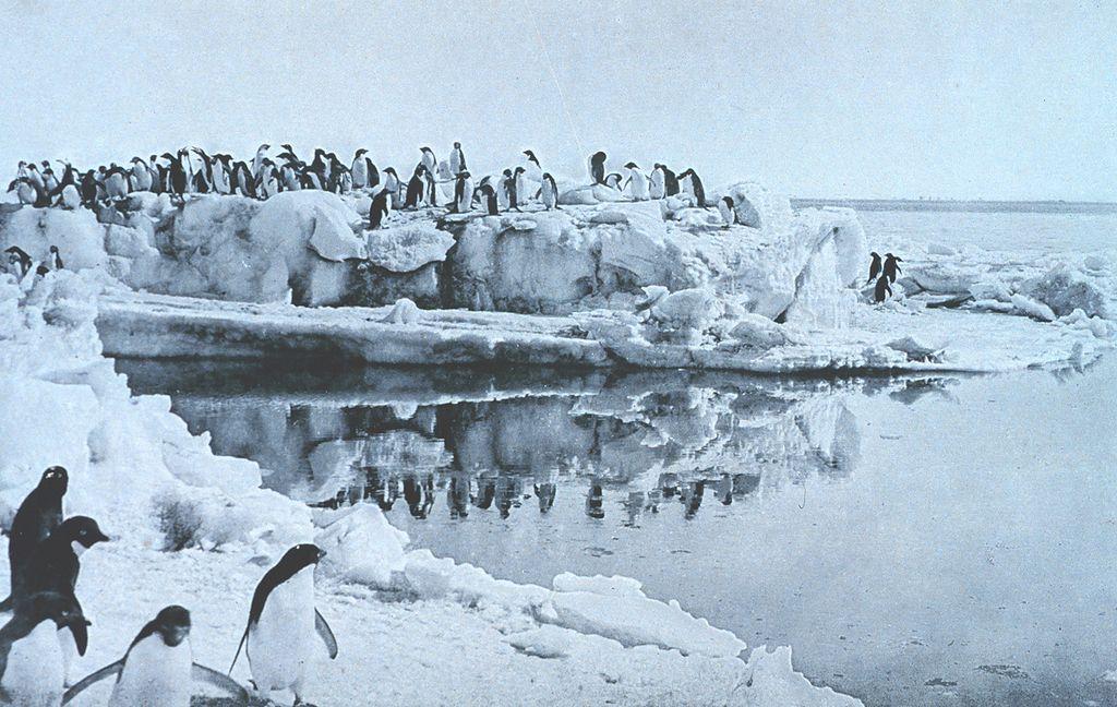 Pinguins da região de Adélia. (Fonte: George Murray Levick/Wikimedia Commons)