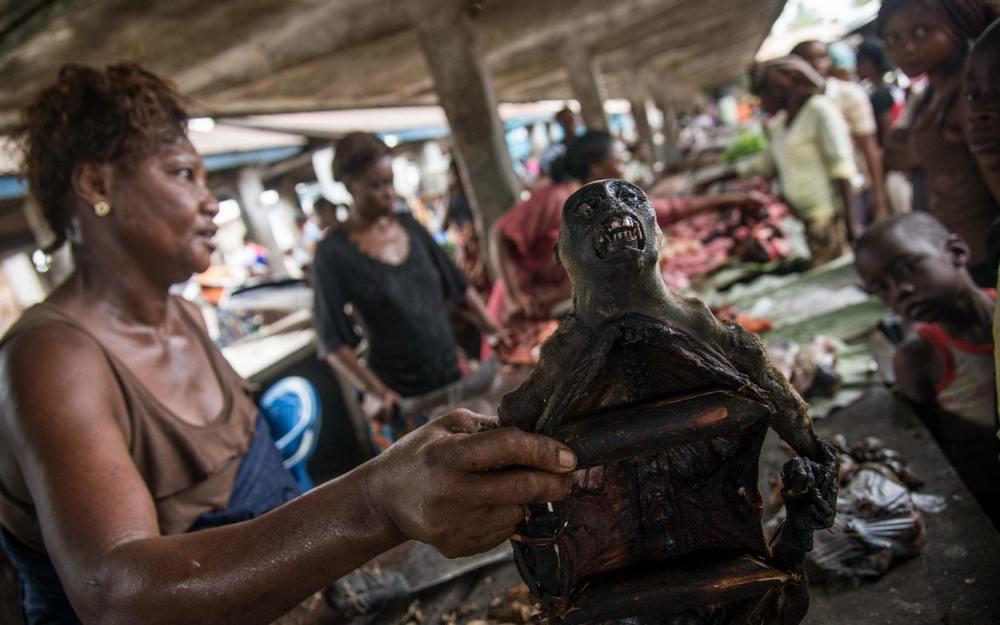 Carne de macaco é oferecida em um mercado de Mbandaka, no Congo.