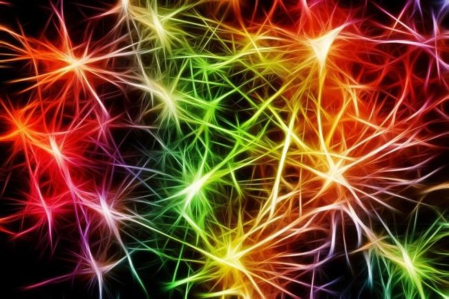 Os neurônios são responsáveis pela transmissão dos impulsos nervosos.