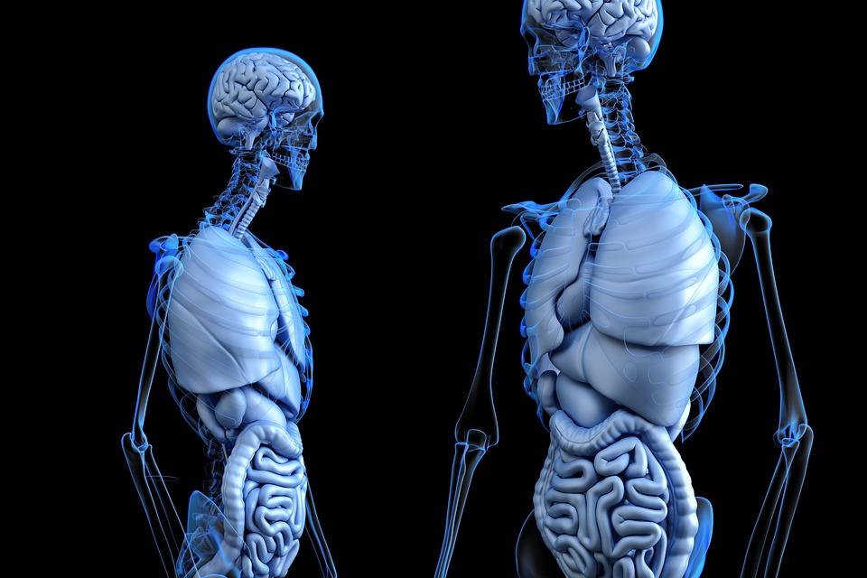 De acordo com livro, cerca de 10% da população tem um baço extra no corpo. (Fonte: Pixabay / Divulgação)