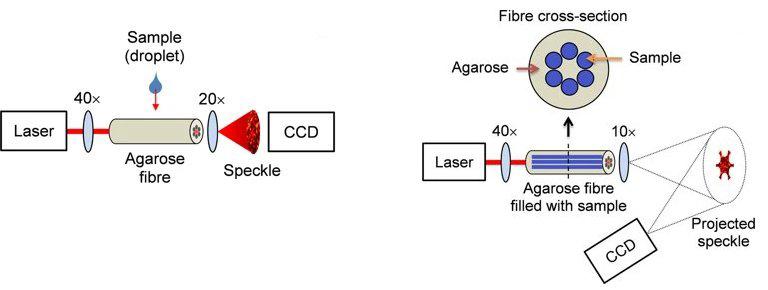 Detalhes da estrutura da fibra óptica de algas marinhas.