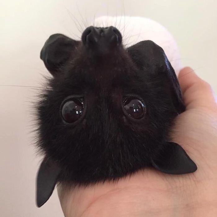 (Fonte: Bats Qld/Reprodução)