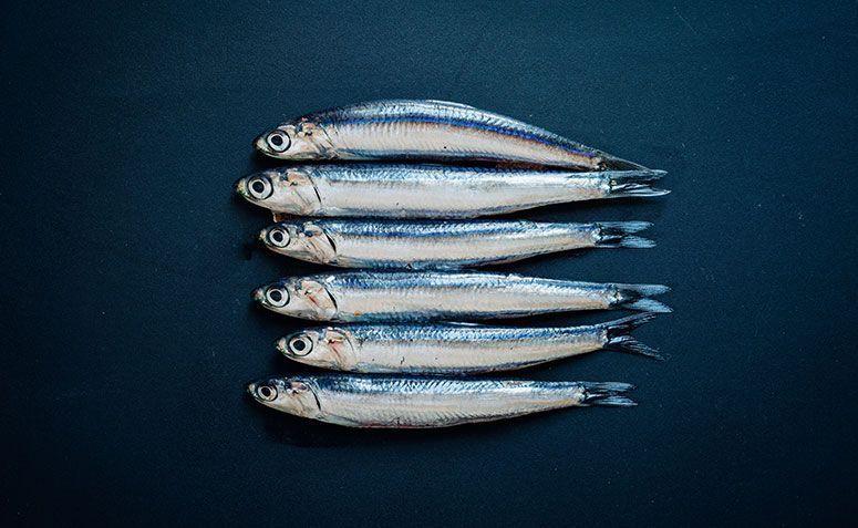 """Tão pequenininhas e inofensivas! Nem parecem que estão ligadas com """"peixes vampiros""""... (Fonte: Getty Images/Reprodução)"""