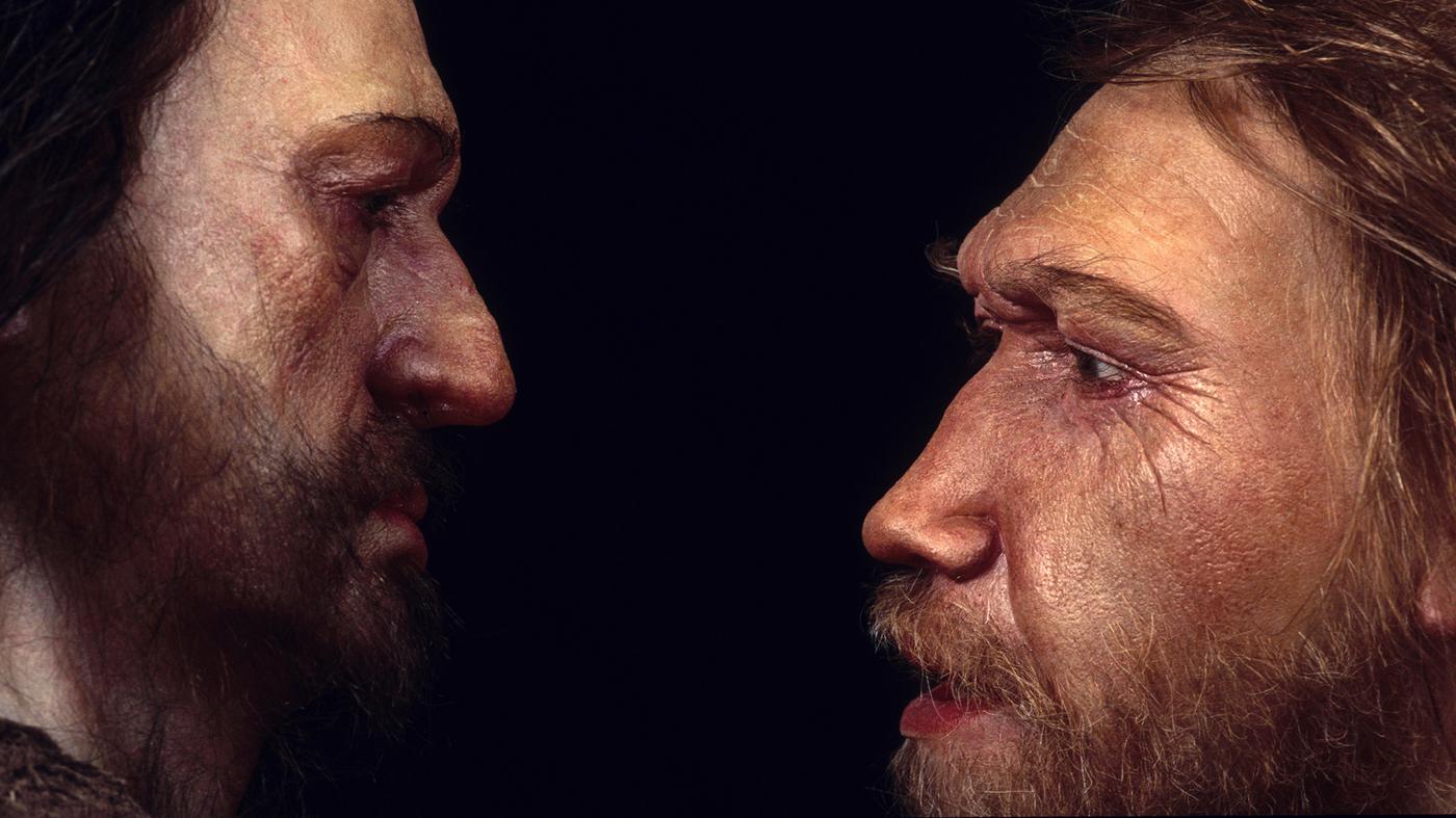 Competição com Homo sapiens foi a responsável pela extinção dos neandertais.