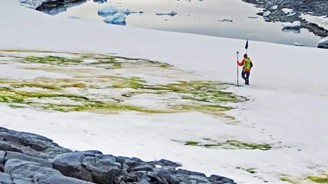 Why is Antarctic snow turning green?
