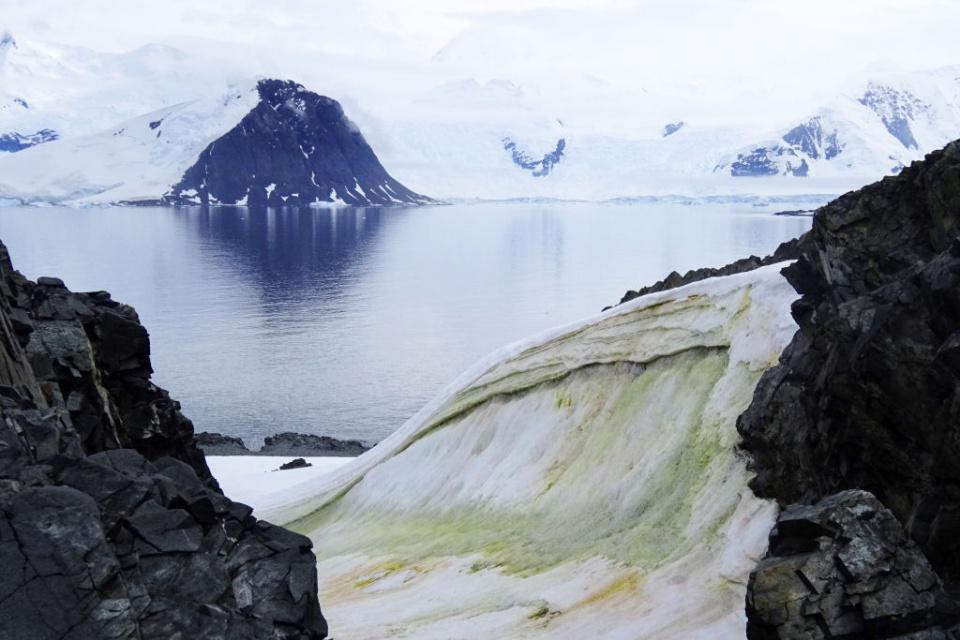 Por que a neve da Antártica está se tornando verde?