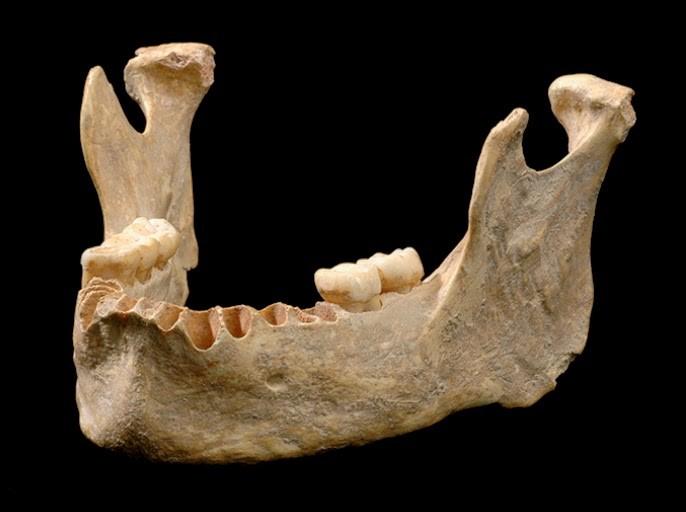 A mandíbula do Osase 1, o homem moderno mais antigo já encontrado.