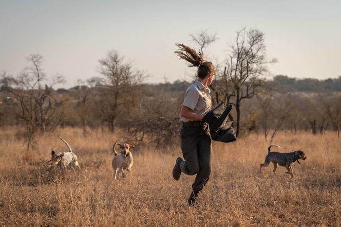 Os cachorros são treinados desde cedo a afugentar caçadores. Fonte: Caters / Divulgação