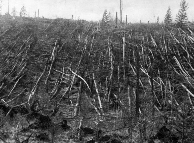 Árvores da região de Tunguska derrubadas pelo meteoro. (Fonte: Sovfoto/Universal Images Group/Reprodução)