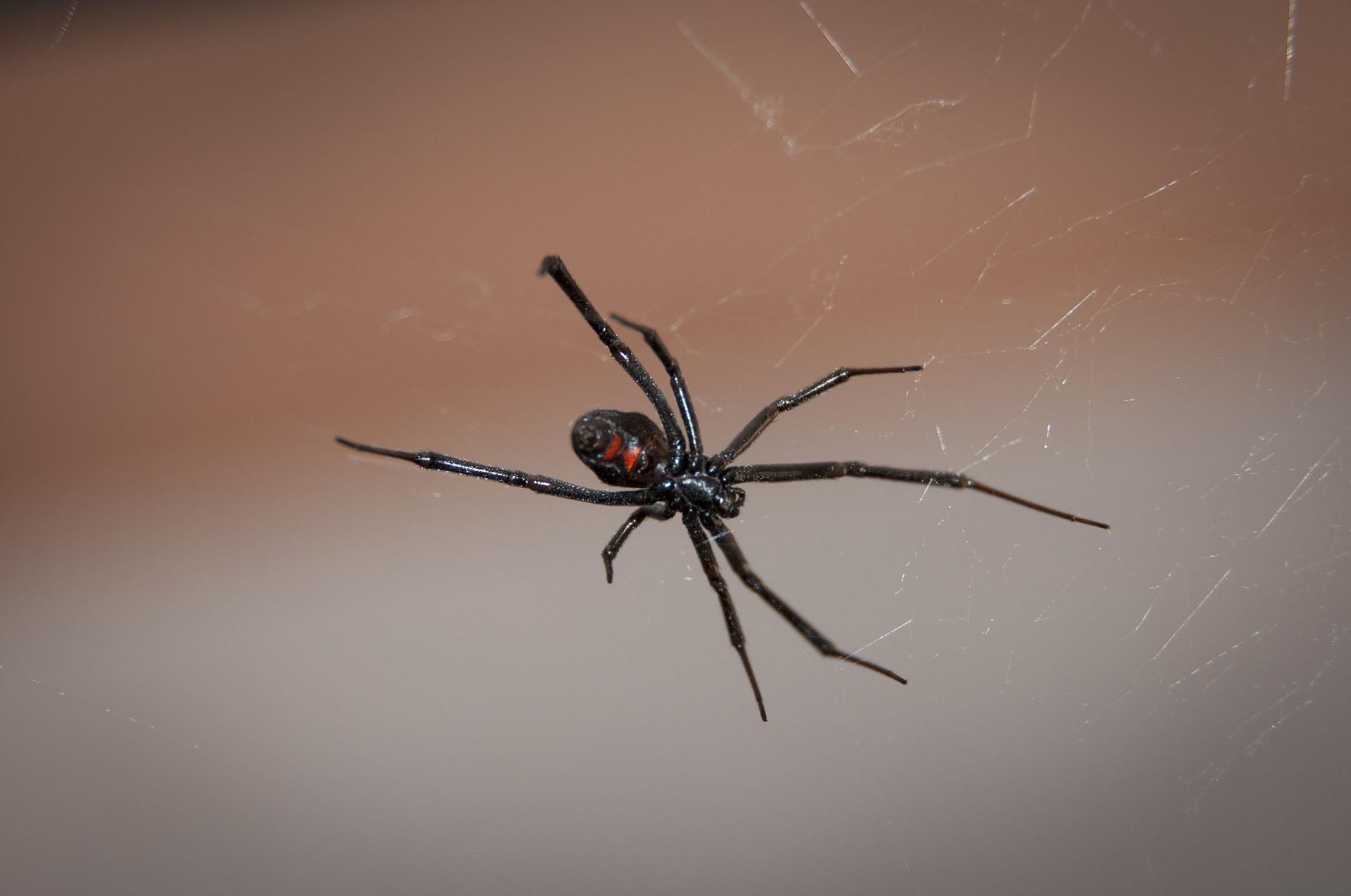 """Irmãos """"provocaram"""" aranha até que animal mordeu os três (Fonte: Pixabay)"""