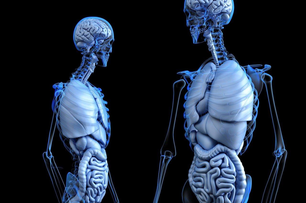 As células transparentes poderão trazer avanços na área médica. (Fonte: Pixabay / Reprodução)
