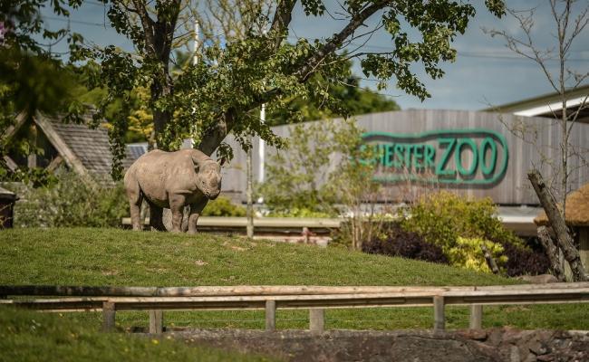 (Fonte: Zoológico de Chester/Reprodução)
