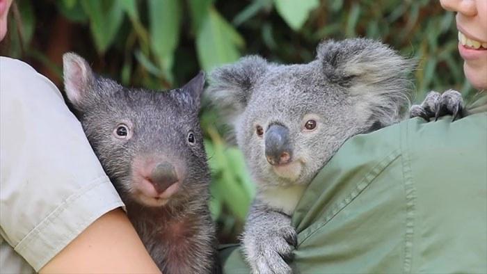 Amizade que nem mesmo a pandemia pode destruir! (Fonte: Reptile Park Australia)