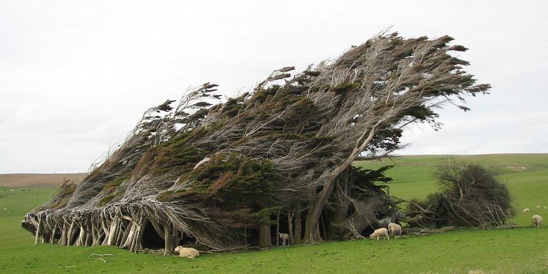 (Fonte: Mauget The Right Way To Treat A Tree/Facebook/Reprodução)