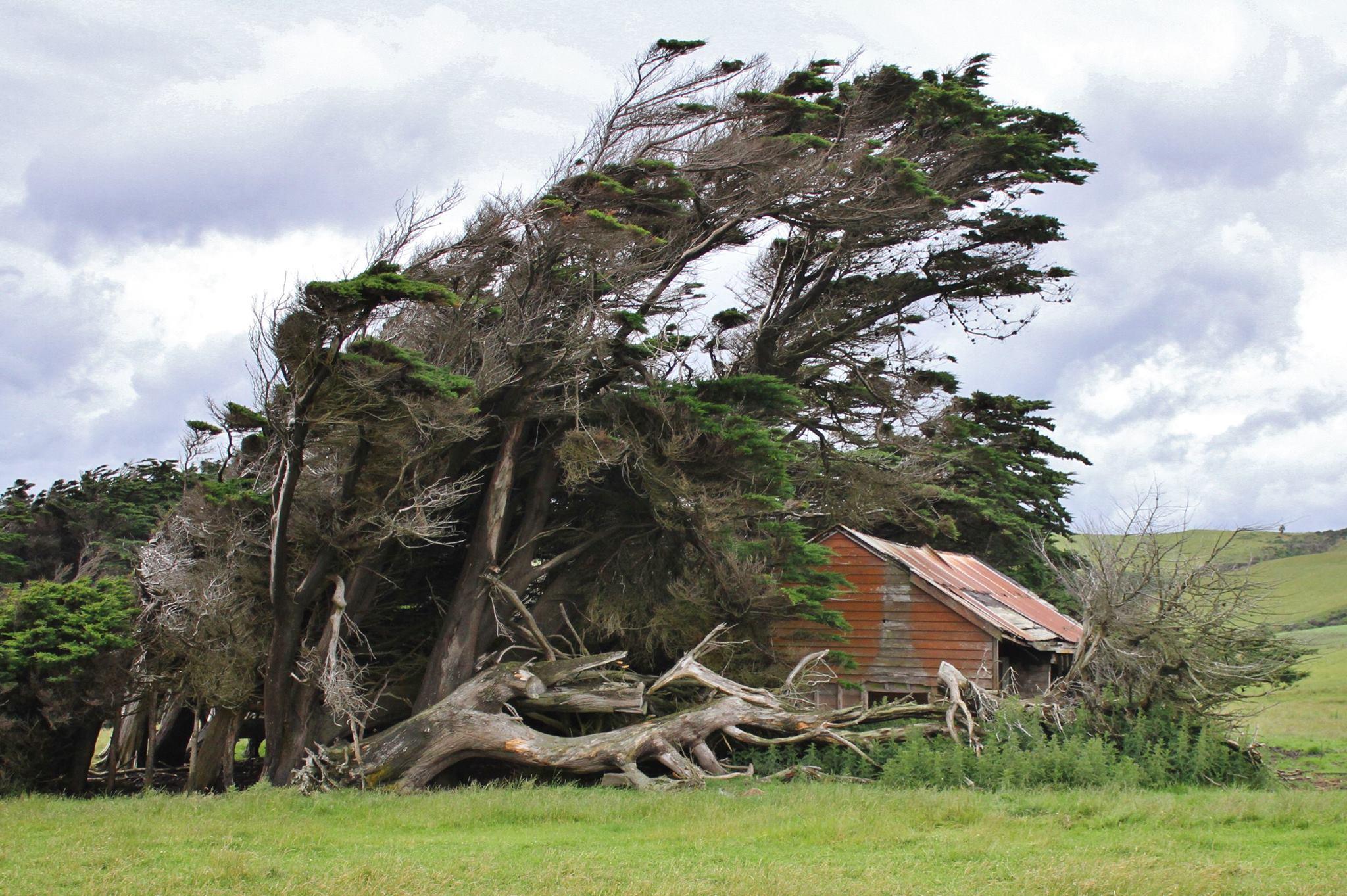 Esse ângulo das árvores tortas, com uma casa dentro, deixam a cena ainda mais macabra! (Fonte: My_Photo_Pics/Facebook/Reprodução)