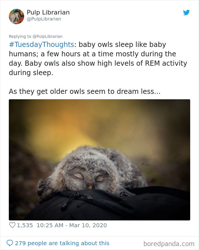 (Fonte: Bored Panda/Reprodução)