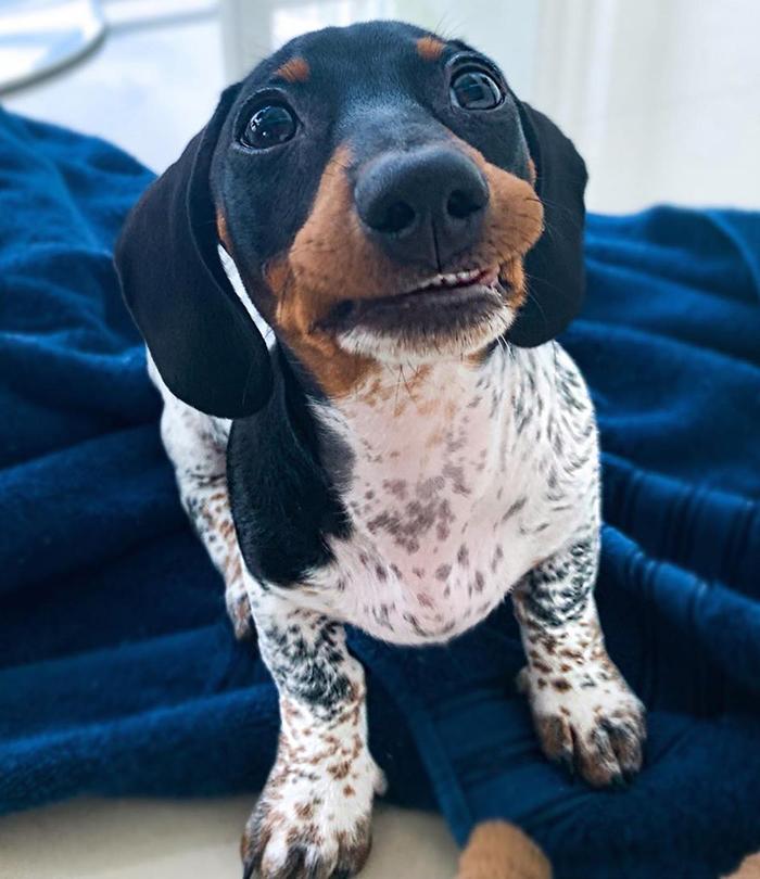 Sorria para a foto, Moo! (Fonte: Instagram/Reprodução)