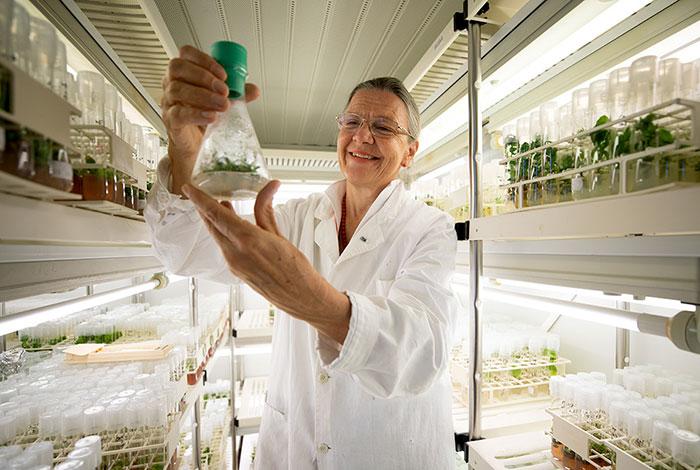 Cientistas austríacos estão estudando a planta de 32 mil anos (Fonte: Bored Panda/Reprodução)