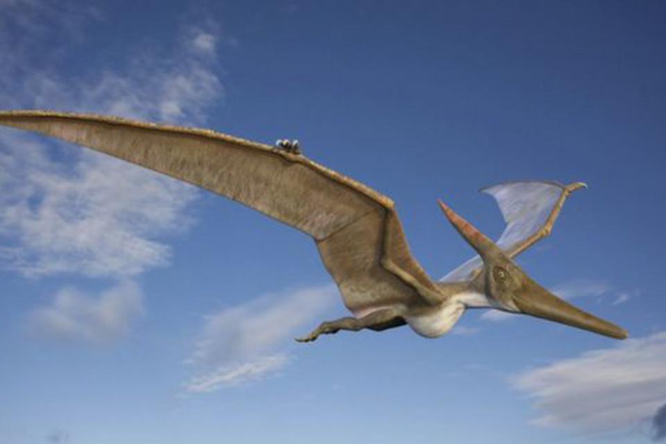 Estudo aborda a evolução dos pterossauros