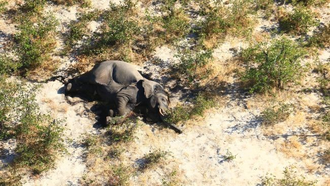 Há mais 15.000 elefantes na região. (Fonte: Elephants Without Borders)