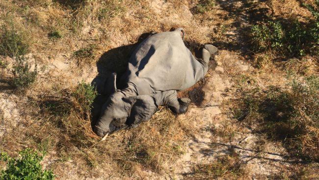 As suspeitas indicam dano neurológico nos animais. (Fonte: Elephants Without Borders)