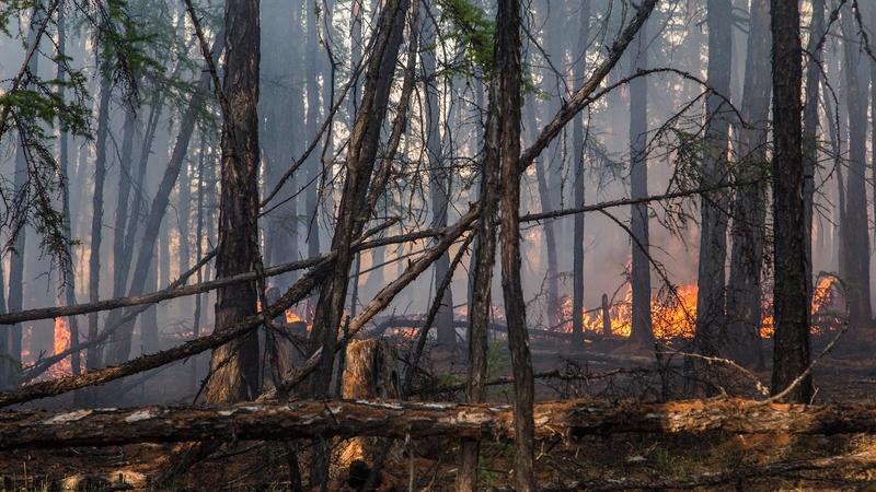 Fogo na floresta em Yakutia no começo de junho. (Fonte: RTE/Reprodução)