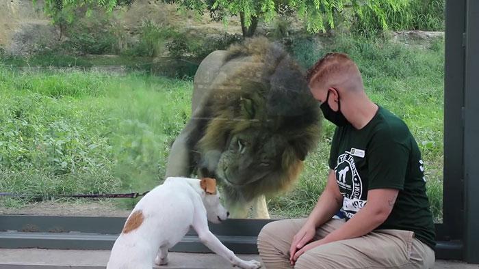 A cachorrinha Carla foi uma das que mais se empolgou com a visita (Fonte: San Antonio Zoo)
