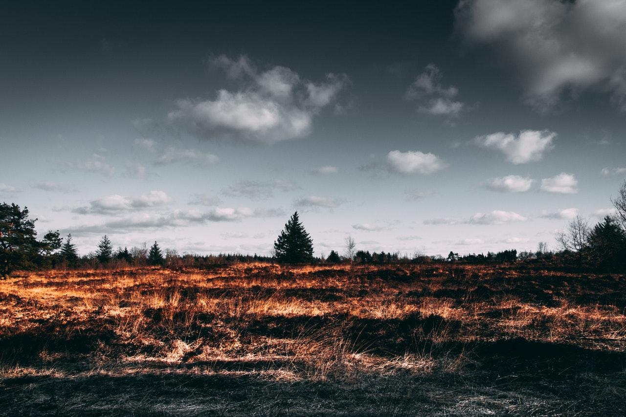 Desmatamento deve bater recorde em 2020 (Fonte: Pexels)