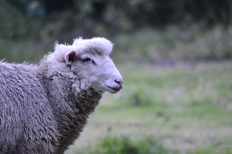 O fio encaracolado é importante para manter os mamíferos aquecidos. (Fonte: Freepik)