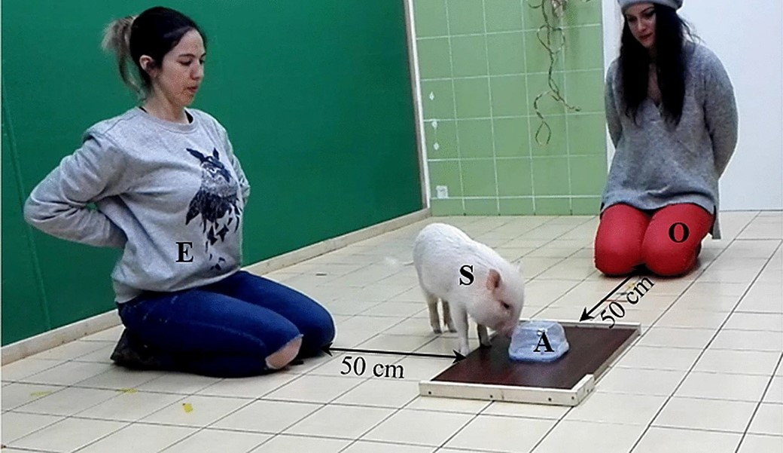 (Animal Cognition/Reprodução)