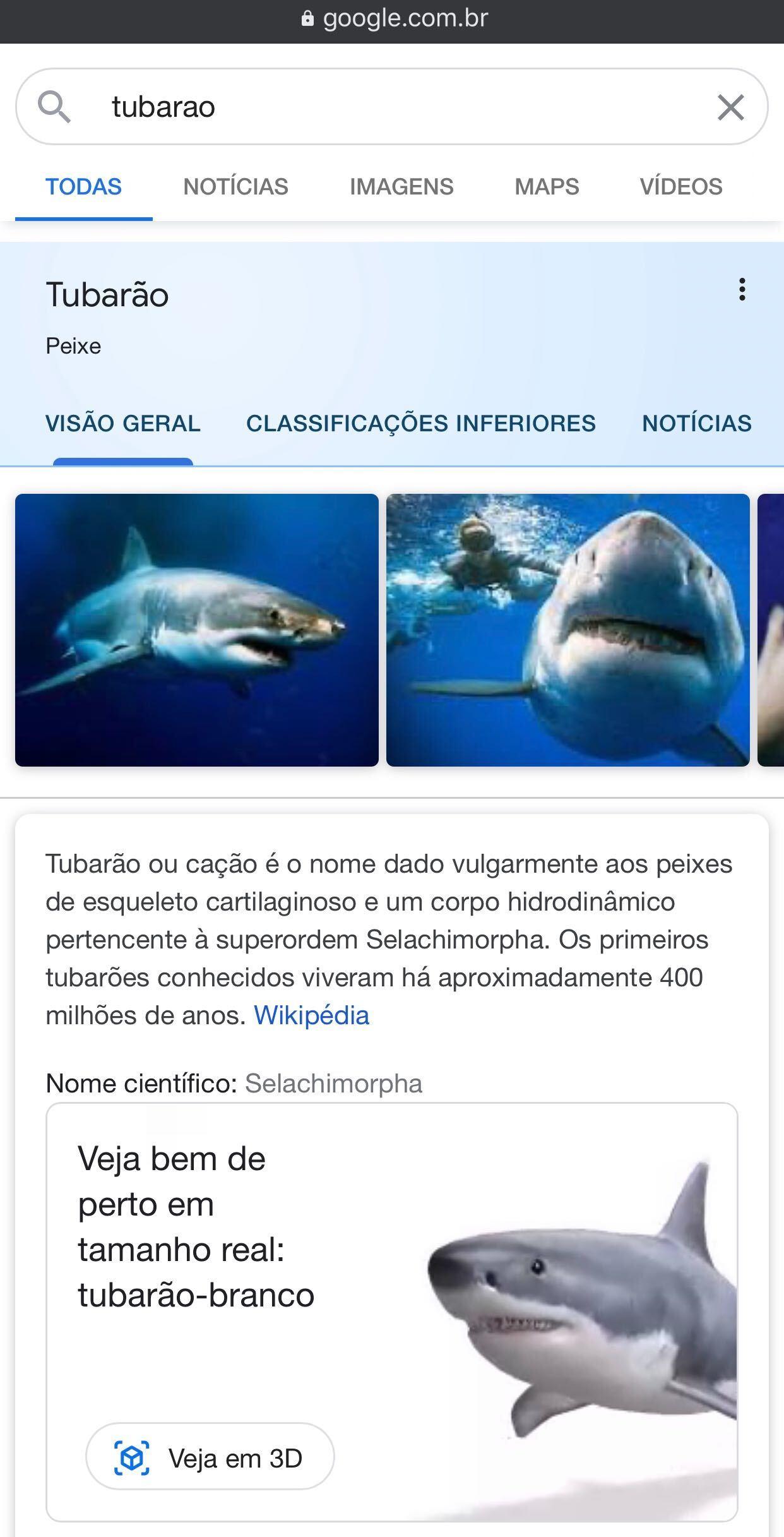 Tubarão 3D