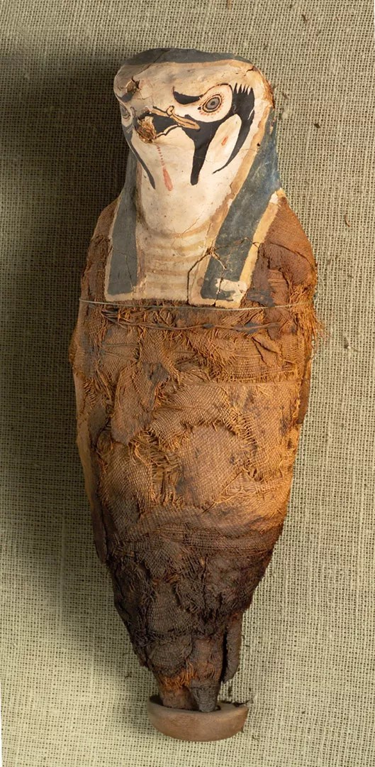 A múmia de falcão que representa Hórus. (Fonte: coleção do National Maritime Museum, Haifa)